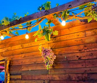 Planta de uvas